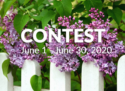 picture of purple flower growing over a white picket fence with the word Contest - June 1 -30, 2020