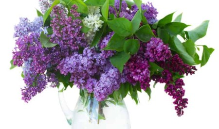 A vase filled with purple flowers