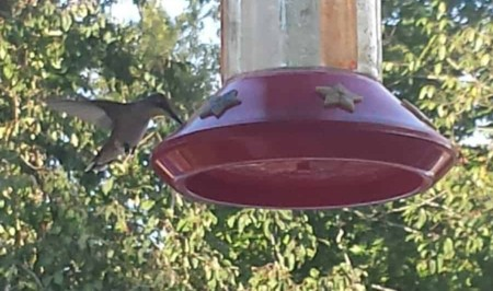 Bird feeder and Birds