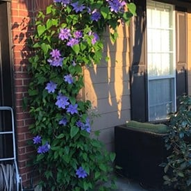 A vase of flowers on a brick building