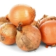 Onion and Bulb