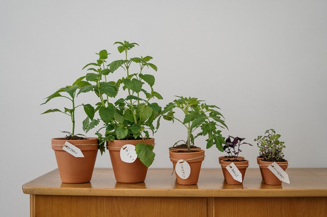 5 indoor small planted pots lined up on a wooden table
